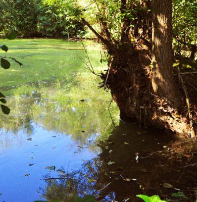 Der Teich hinter dem Hof