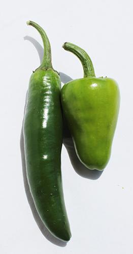 BIO Chili grün