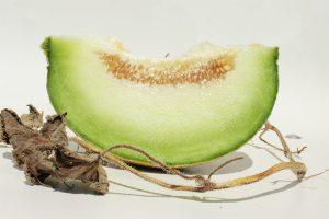 BIO Melonen