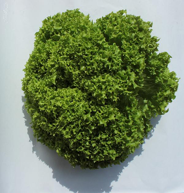BIO Salat Variationen