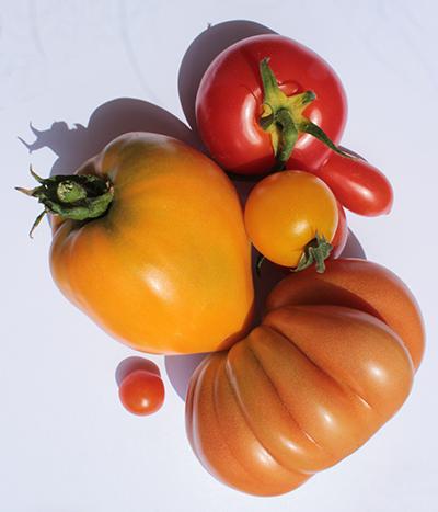 BIO Tomaten Vielfalt