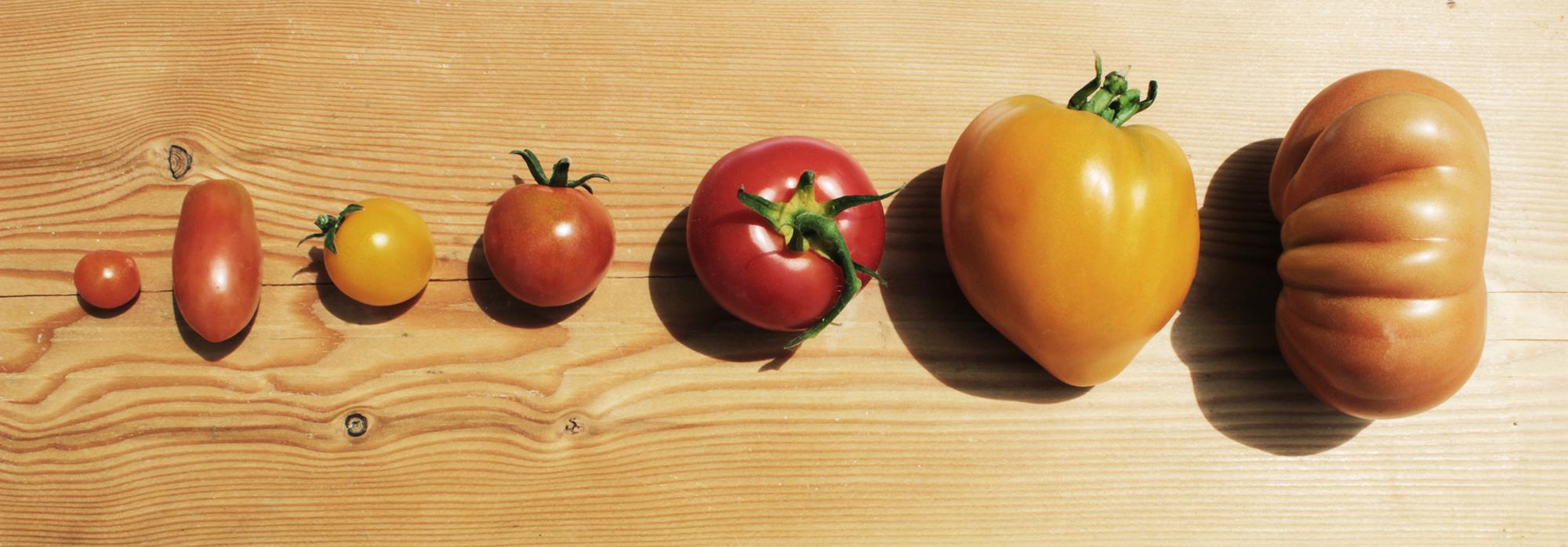 Immer wider normal. BIO Tomaten aus OÖ
